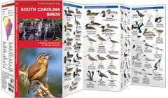 South Carolina Birds (Pocket Naturalist® Guide)