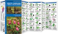 South Carolina Trees & Wildflowers (Pocket Naturalist® Guide)