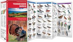 Tennessee Birds (Pocket Naturalist® Guide)