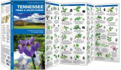 Tennessee Trees & Wildflowers (Pocket Naturalist® Guide)