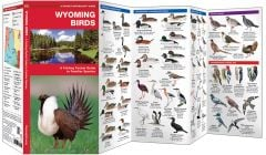 Wyoming Birds (Pocket Naturalist® Guide)