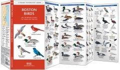 Boston Birds (Pocket Naturalist® Guide)
