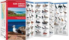 San Diego Birds (Pocket Naturalist® Guide)