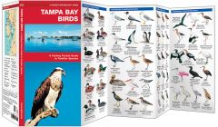 Tampa Bay Birds (Pocket Naturalist® Guide)