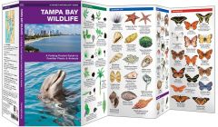 Tampa Bay Wildlife (Pocket Naturalist® Guide)