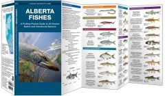 Alberta Fishes (Pocket Naturalist® Guide)