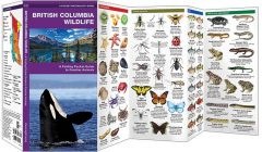 British Columbia Wildlife (Pocket Naturalist® Guide)
