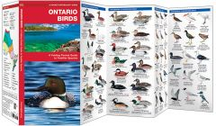Ontario Birds, 2nd Edition (Pocket Naturalist® Guide)