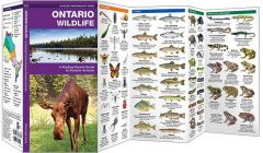 Ontario Wildlife, 2nd Edition (Pocket Naturalist® Guide)