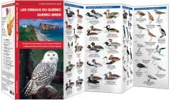 Quebec Birds /Les Oiseaux Du Quebec (Pocket Naturalist® Guide)