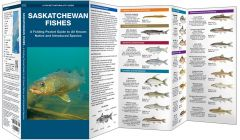 Saskatchewan Fishes (Pocket Naturalist® Guide)