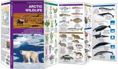 Arctic Wildlife (Pocket Naturalist® Guide)
