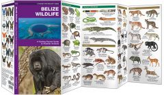 Belize Wildlife (Pocket Naturalist® Guide)