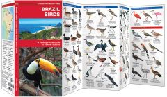 Brazil Birds (Pocket Naturalist® Guide)