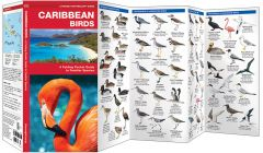 Caribbean Birds (Pocket Naturalist® Guide)