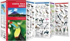 Costa Rica Birds (Pocket Naturalist® Guide)
