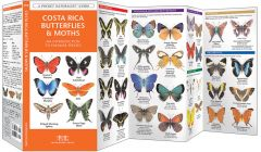 Costa Rica Butterflies & Moths (Pocket Naturalist® Guide)