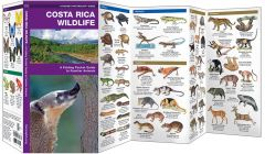 Costa Rica Wildlife (Pocket Naturalist® Guide)