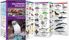 Galapagos Wildlife (Pocket Naturalist® Guide)