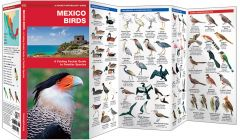 Mexico Birds (Pocket Naturalist® Guide)