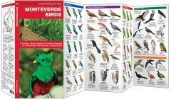 Monteverde Birds (Pocket Naturalist® Guide)