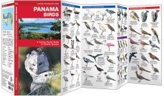 Panama Birds (Pocket Naturalist® Guide)
