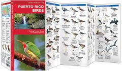 Puerto Rico Birds (Pocket Naturalist® Guide)