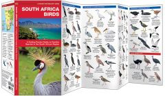South Africa Birds (Pocket Naturalist® Guide)