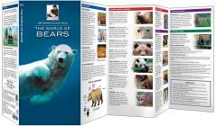 World of Bears, The (Jeff Corwin's Explorer Series®)