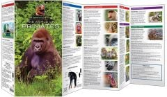World of Primates, The (Jeff Corwin's Explorer Series®)