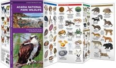 Acadia National Park Wildlife (Pocket Naturalist® Guide)