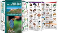 Cape Cod Seashore Life (Pocket Naturalist® Guide)