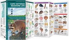 Cape Hatteras Seashore Life (Pocket Naturalist® Guide)