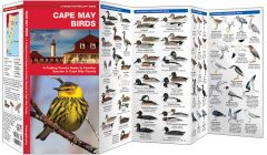 Cape May Birds (Pocket Naturalist® Guide)