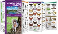 Central Park Wildlife, 2nd Edition (Pocket Naturalist® Guide)