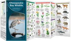 Chesapeake Bay Wildlife, 2nd Edition (Pocket Naturalist® Guide)