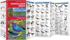 Everglades Birds (Pocket Naturalist® Guide)
