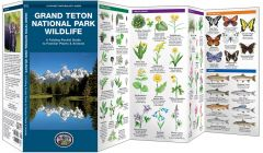 Grand Teton National Park Wildlife (Pocket Naturalist® Guide)