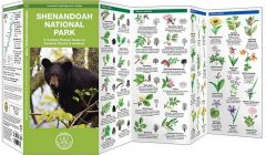 Shenandoah National Park (Pocket Naturalist® Guide)