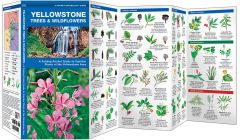 Yellowstone Trees & Wildflowers (Pocket Naturalist® Guide)