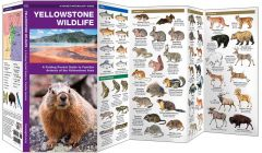 Yellowstone Wildlife (Pocket Naturalist® Guide)