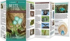 Nests & Eggs (All About Birds Pocket Guide®)