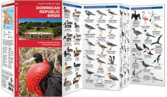 Dominican Republic Birds (Pocket Naturalist® Guide)