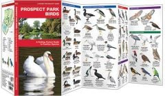 Prospect Park Birds (Pocket Naturalist® Guide)