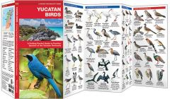 Yucatan Birds (Pocket Naturalist® Guide)