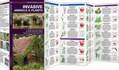 Invasive Animals & Plants: A Folding Pocket Guide to North America's Most Aggressive Invasive Species (Pocket Naturalist® Guide)