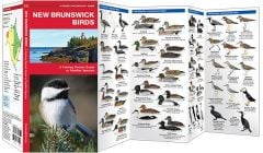 New Brunswick Birds (Pocket Naturalist® Guide)