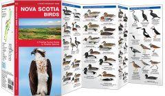 Nova Scotia Birds (Pocket Naturalist® Guide)