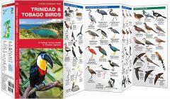 Trinidad & Tobago Birds (Pocket Naturalist® Guide)