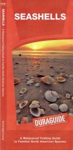 Seashells, 2nd Edition (Pocket Naturalist® Guide)